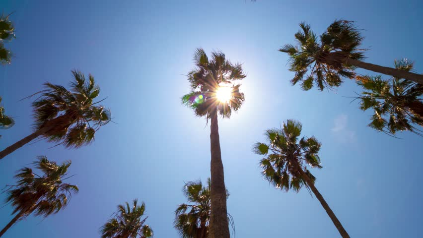 Palm trees from below on clear blue sky background. 4K time lapse. Summer sun through tree leaves and lens flare. Vacation concept. | Shutterstock HD Video #26872351