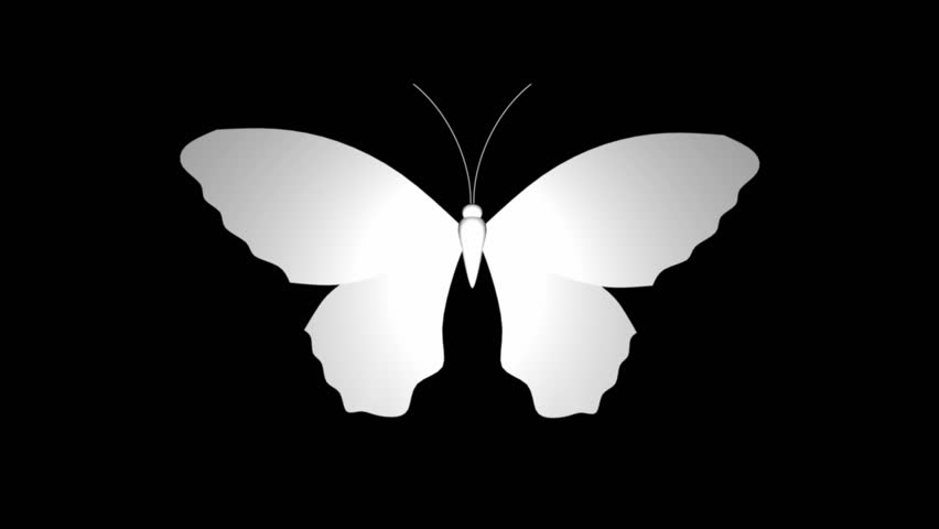 Large White Butterfly Or Moth On Black Space Stock Footage ...