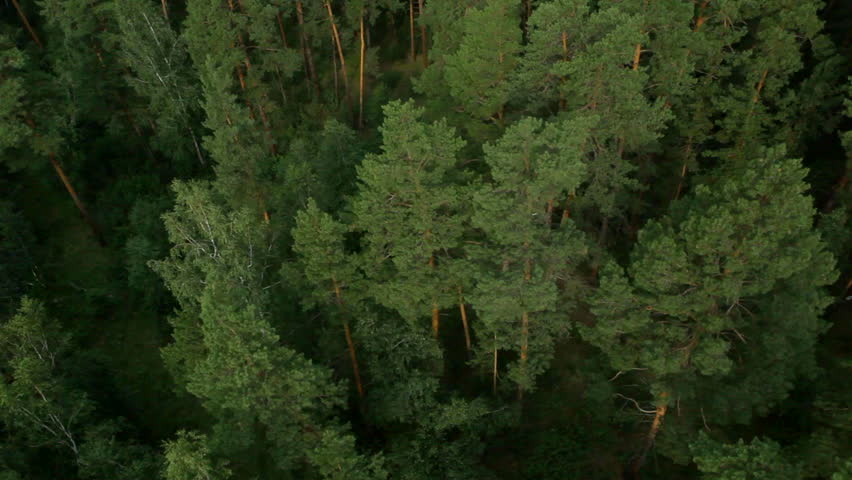 flight over beautiful forest