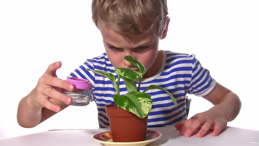 Watering plant  - HD stock video clip