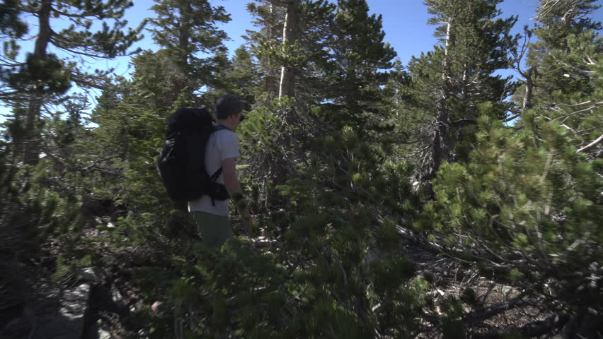 Backpacker hiking through trees and ending on a log with a view | Shutterstock HD Video #27193813