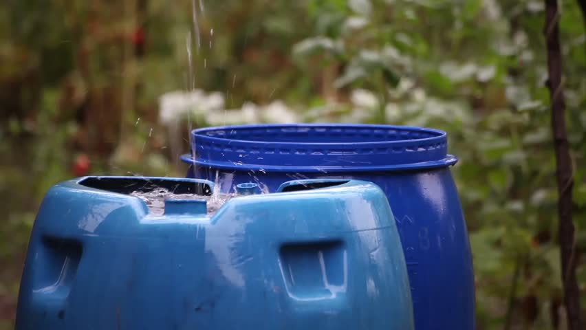 Rain water collecting in blue barrels. Farm, country side, domestic view.