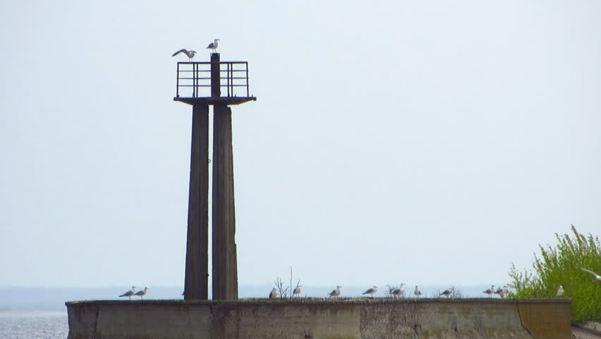 Seagulls fly against the backdrop of the pier with a lighthouse. Birds are sitting on an abandoned pier. #27577600