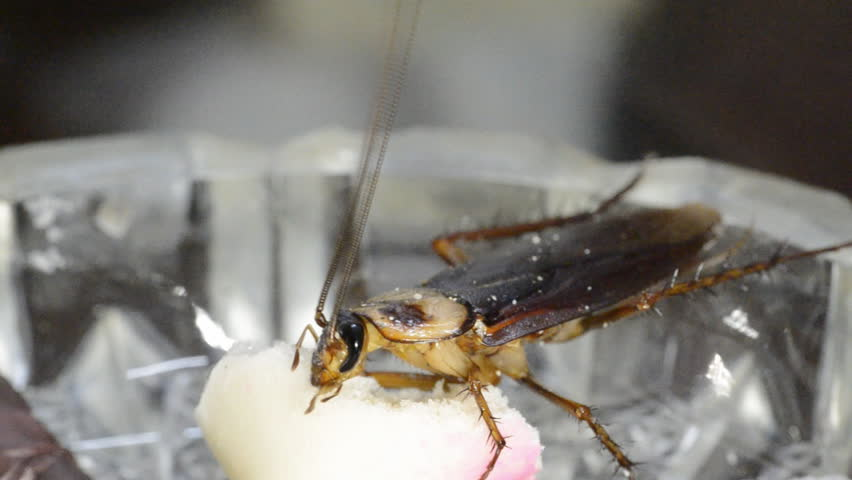 house bug cockroach - HD stock video clip