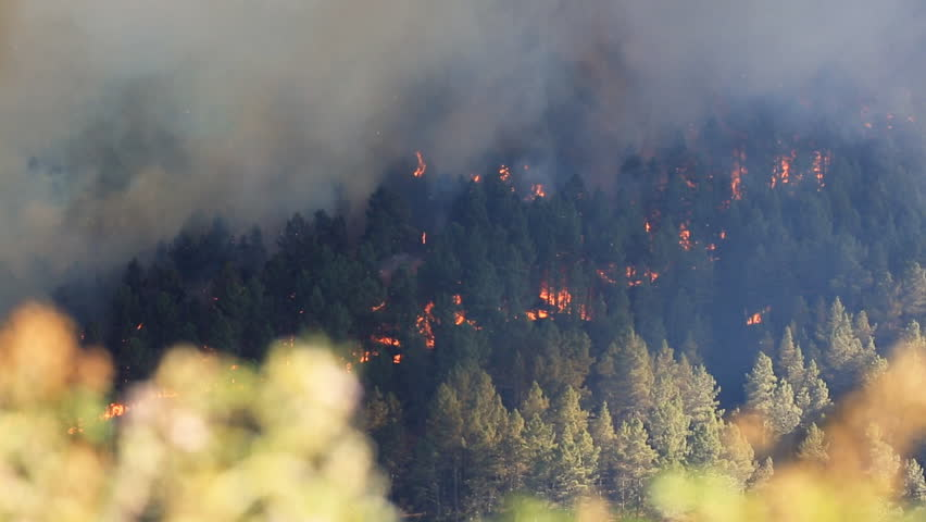 Raging pine tree fire across the hill, helicopter sound