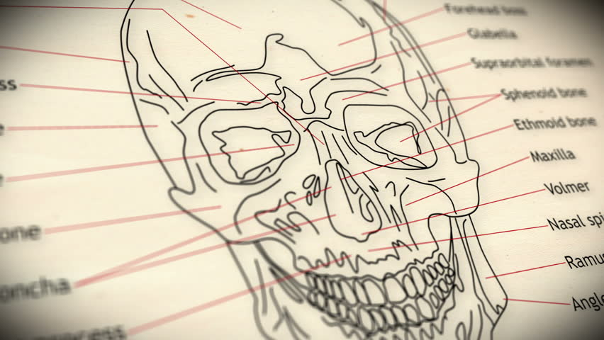 Human Skull structure animation illustration Shallow Depth of Field Film Shot Design - HD stock footage clip