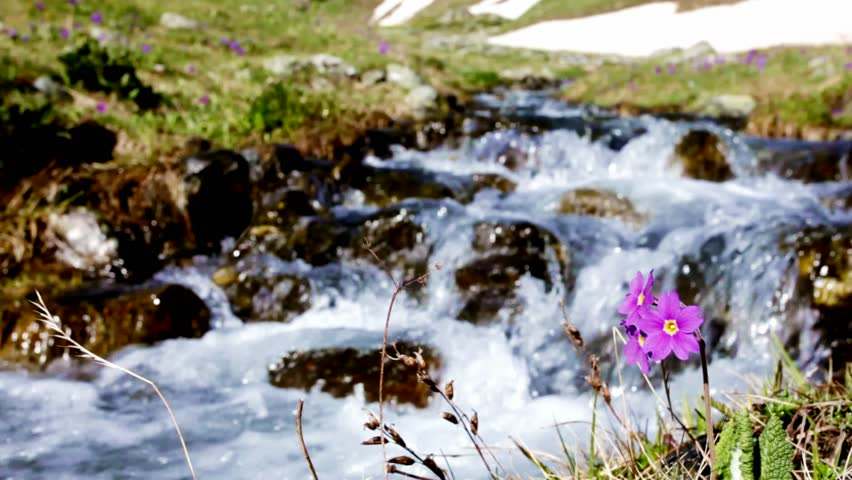 mountain stream, flowers #2846698