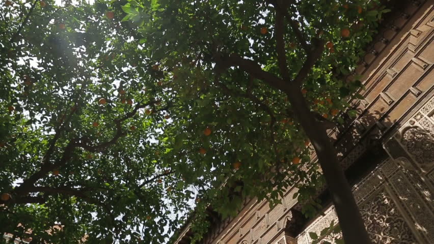Tangerines on the tree in temple Bahia Morocco