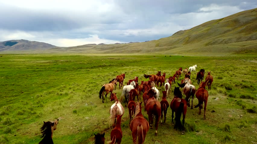 Aerial view of a herd of horses galloping across the steppe | Shutterstock HD Video #29744917
