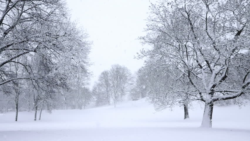Falling snow in a winter park with snow covered trees, slow motion, filmed at 60p | Shutterstock HD Video #3178852