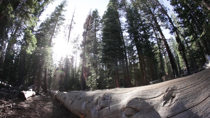 Close up of a mountain bike riding over a falled tree filmed at the Lake Tahoe National Park in HD