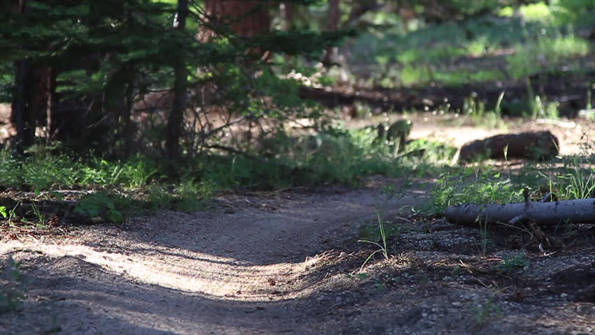 A mountain biker speeds around a corner on an off road trail filmed at the Lake Tahoe National Park in HD
