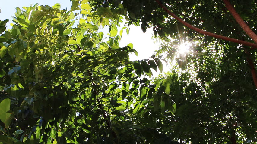 Sun reflection with green leaves | Shutterstock HD Video #3231376
