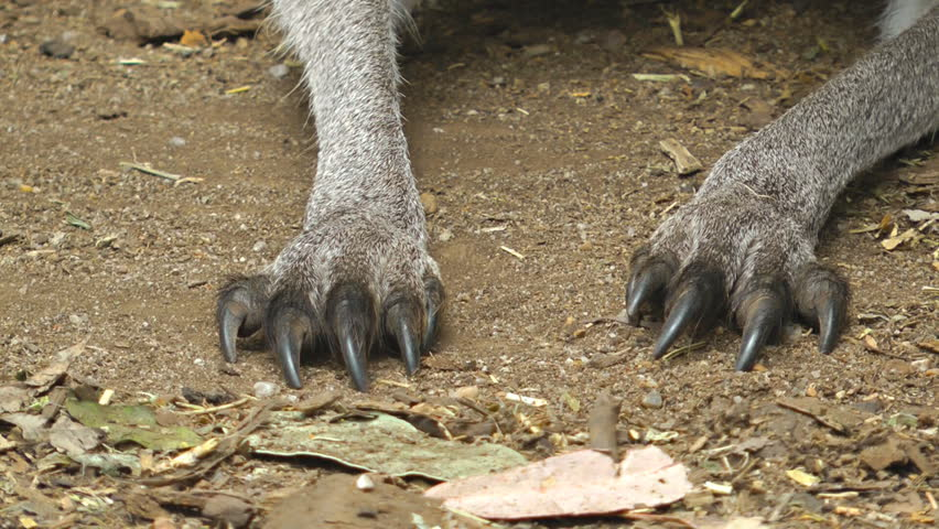 Cat Claws Vs Dog Claws