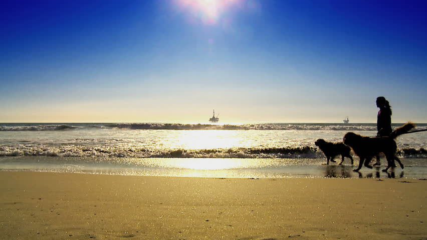 Dog walkers on beach with oil platform in the distance - HD stock video clip