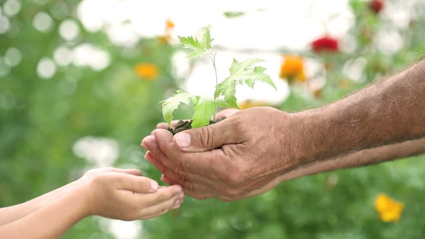 Child and senior man hands holding young plant against spring green background. Ecology concept
