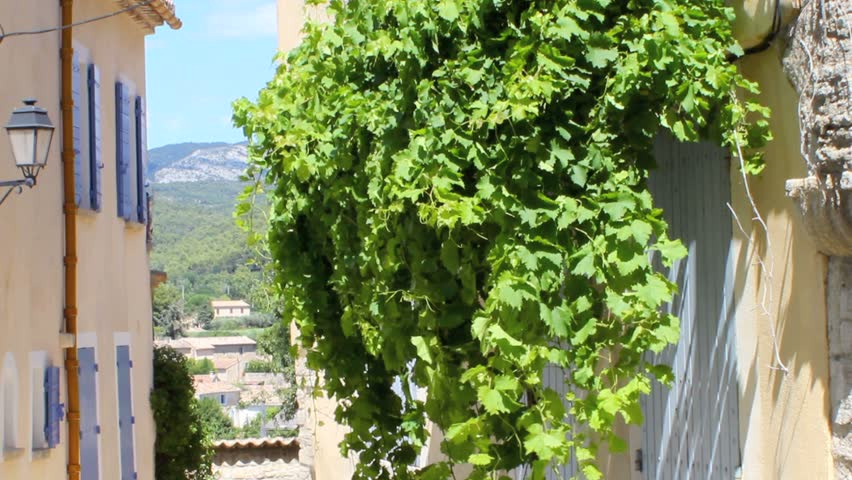 Vine in french village. Provence. France - HD stock video clip