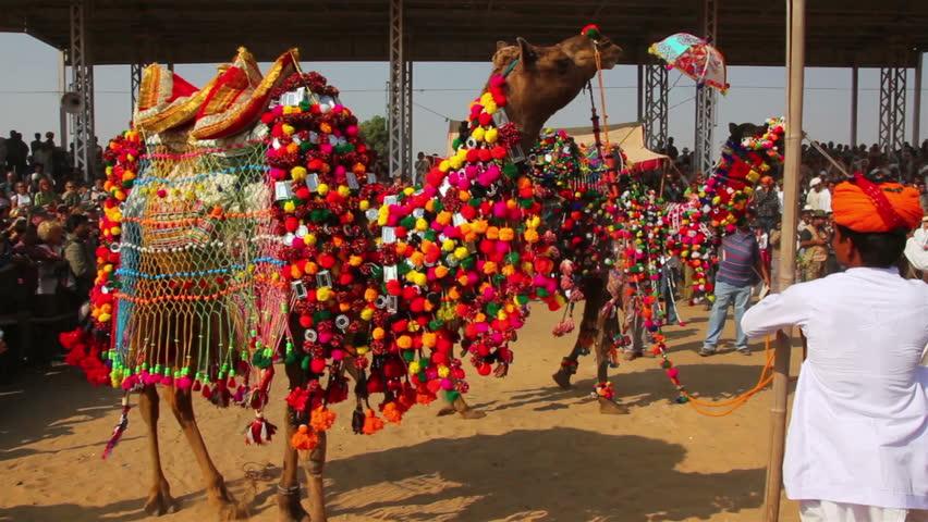 PUSHKAR, INDIA - NOVEMBER 22, 2012: Competition to decorate camels at fair in Pushkar, India, 22 nov 2012 - HD stock video clip