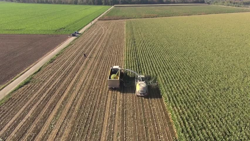 Aerial view of a farmer with a thresher , tractor and trailer harvesting maize or corn as a winter livestock feed and silage