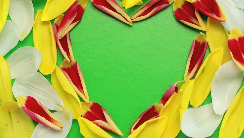 Flower petals flying heart shaped in green background - HD stock video clip