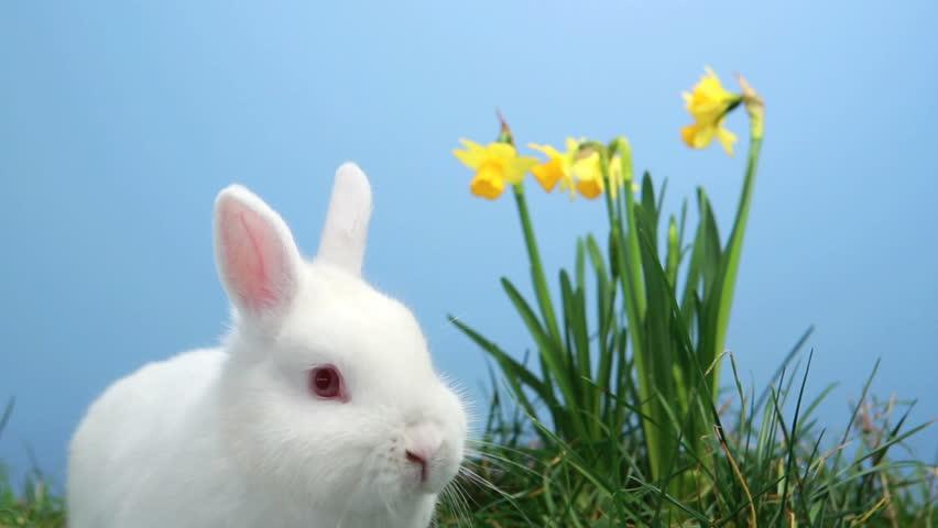 bunny rabbit sniffing around - photo #6