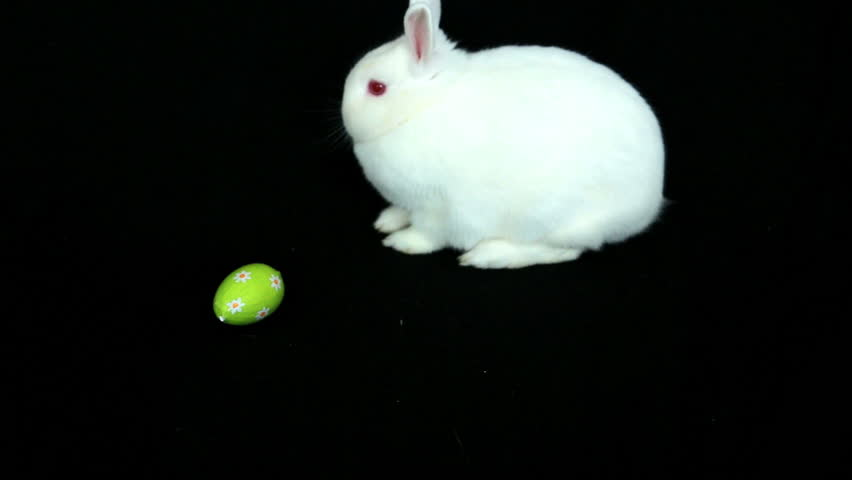 bunny rabbit sniffing around - photo #43