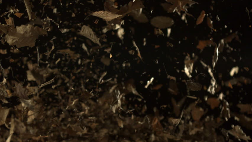 Blowing pile of dried leaves shooting with high speed camera, phantom flex.