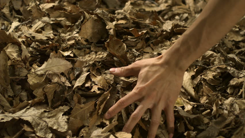 Grabbing piles of dried leaves shooting with high speed camera, phantom flex.