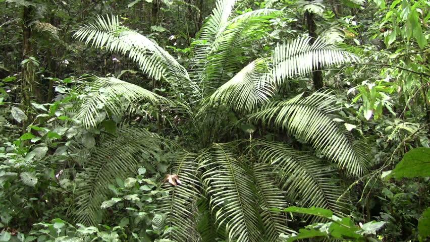 Interior of tropical rainforest in Ecuador - HD stock footage clip