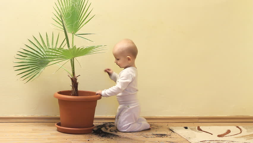 Amusing little baby taking out the soil from flower pot and throwing to floor