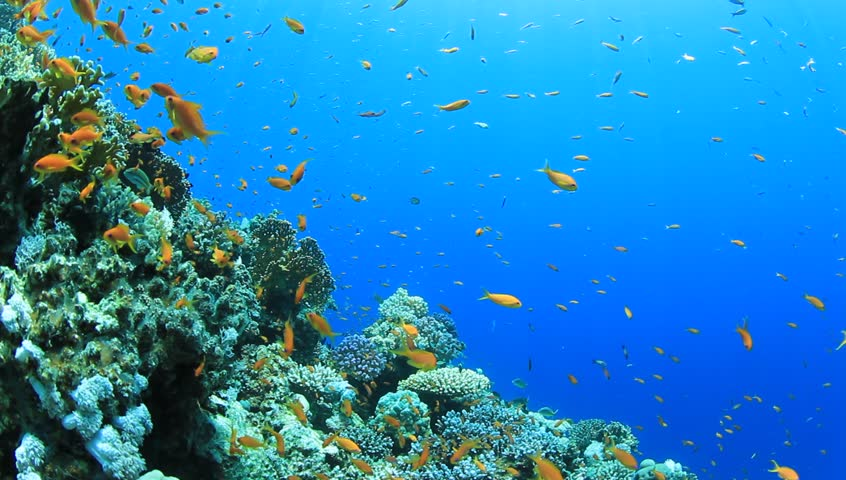 exotic fishes corals hd - photo #13
