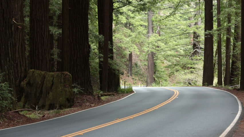 Redwood forest California car drives around corner. Vacation travel in vehicles along scenic byway and roads. Redwood National and State parks with old growth trees and new growth. - HD stock video clip