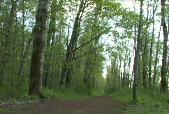 Man walks away from camera in lush Oregon Forest on trail.