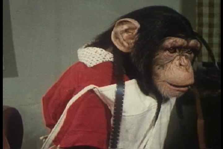 1950s - A chimp edits film in the studio. - SD stock footage clip