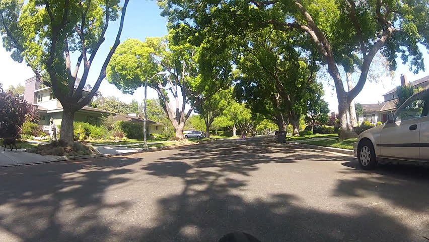 A point of view shot of someone riding a bicycle on a lush and verdant tree