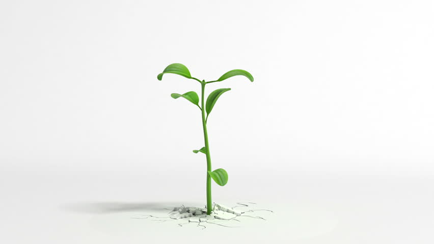 Growing plant on white background