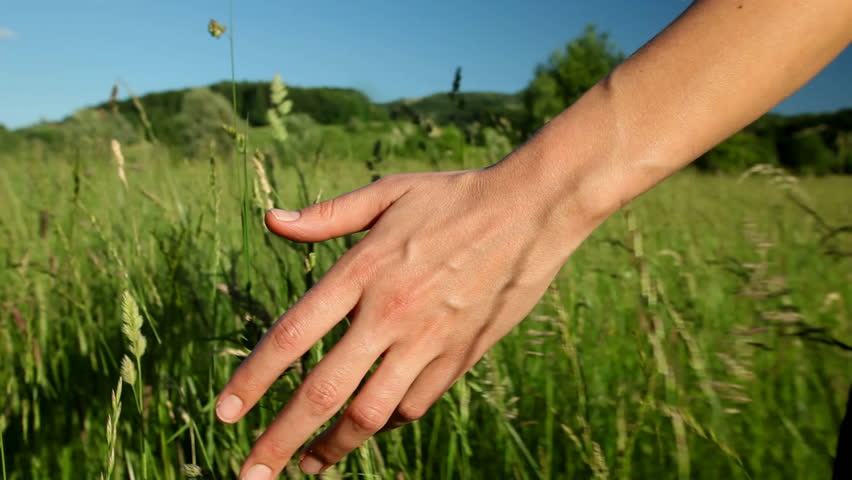Woman walking touching long grass in field in summer on blue sky