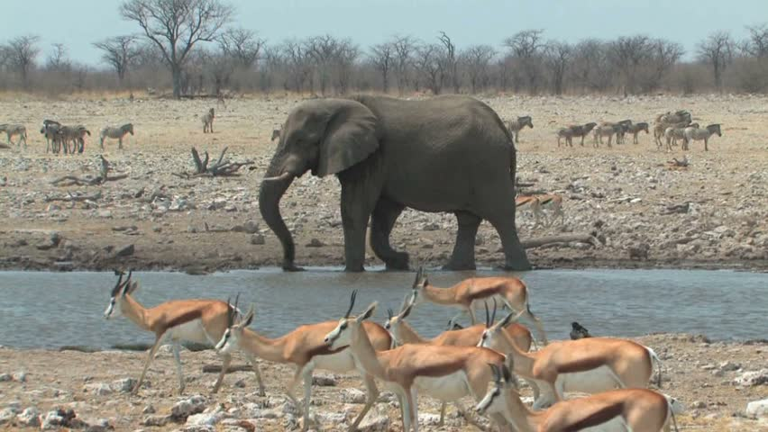 Bull Elephant splashing in waterhole during the dry season in Etosha National Park, Namibia, Africa