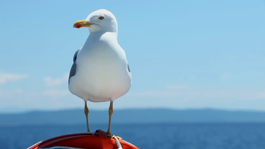 Seagull sitting on sailboat railing enjoying the ride