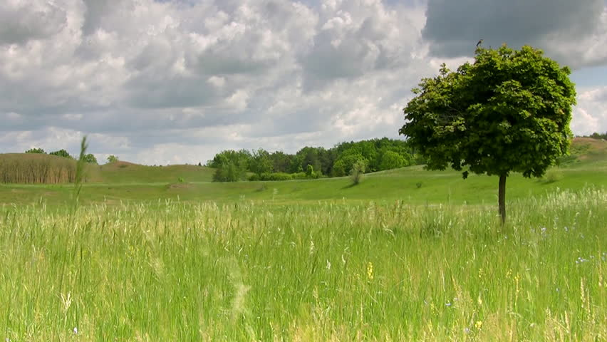 Single maple in the field, clouds flying time-lapse, HD - HD stock footage clip