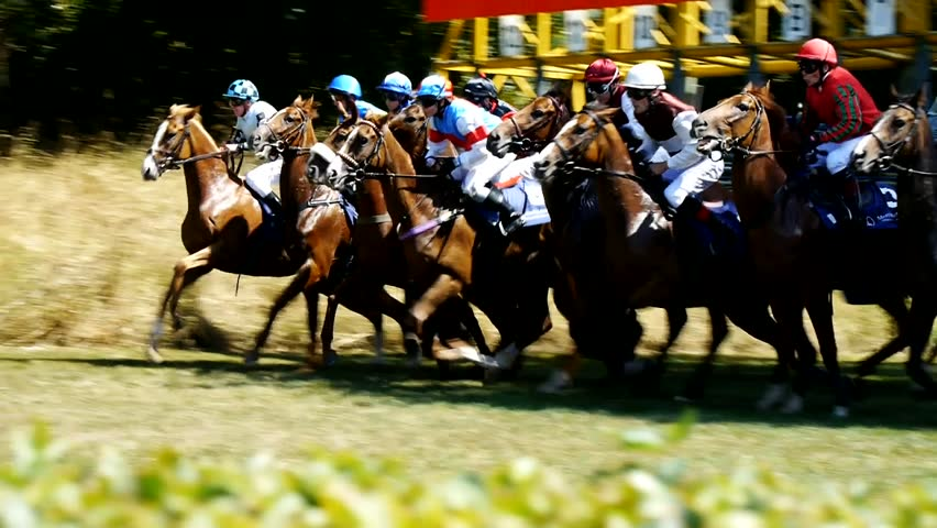 SAARBRÜCKEN - AUG 15, 2013: Horse racing in Germany. Part 1. Starting gate (Slow Motion)
