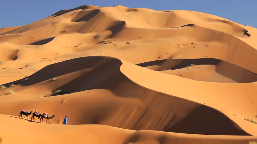 Local man in traditional tribal Touareg robes leading a group of camels in the desert near Ê Erg Chebbi, Morocco, Africa