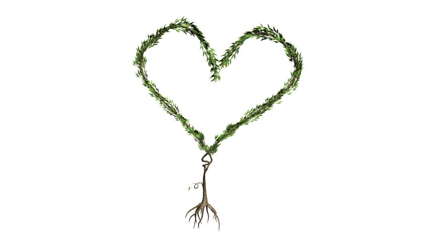 Growing Tree forming heart (Alpha Version available in Portfolio) - HD stock video clip