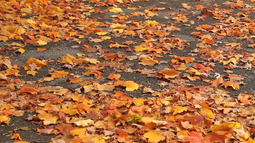 Rust-colored and withered Autumn leaves on the ground on a windy day/  Autumn leaves