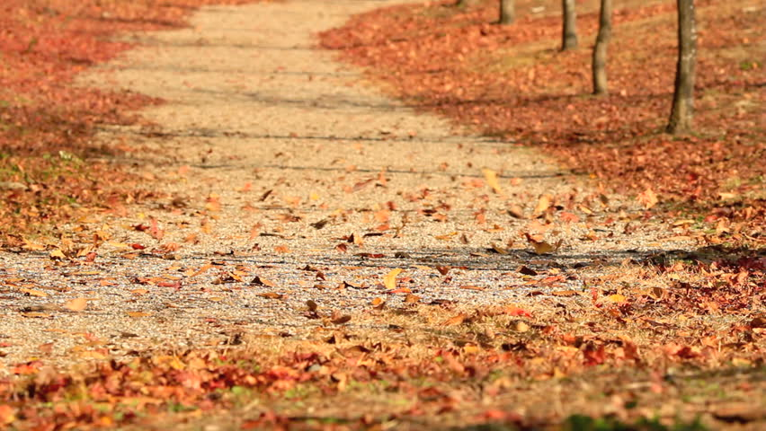 Autumn leaves are flying down the road.