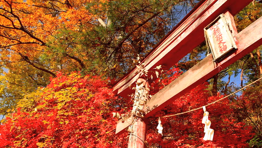 Torii on the background of autumn leaves.