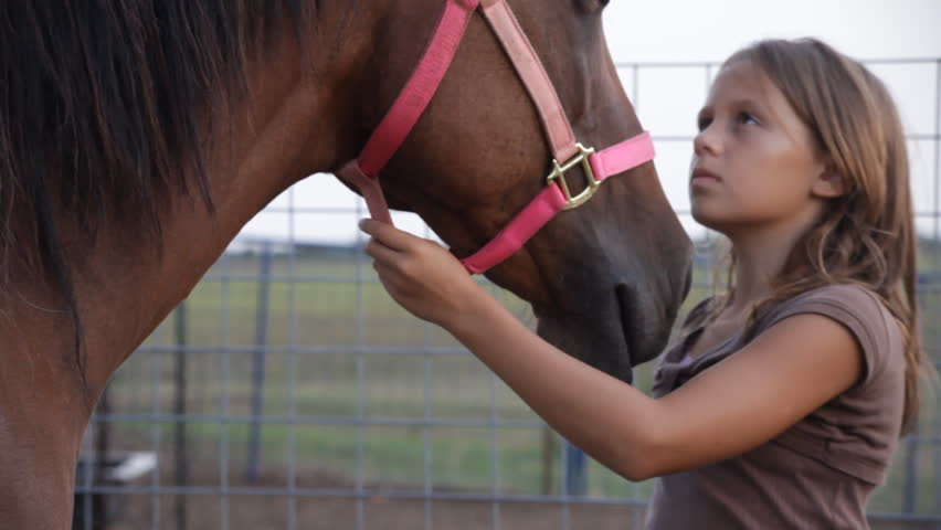 A young girl gently brushing and petting her horse. - HD stock video clip