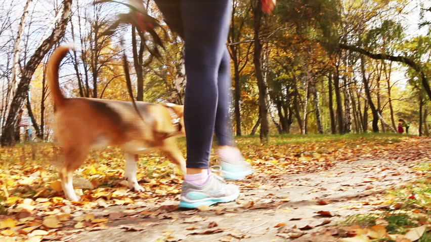 Girl  walk about  with beagle puppy in autumnal park - HD stock footage clip