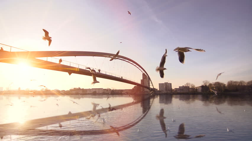 beautiful sunset sun flare water mirror reflection. swan seagull birds. bridge. slow motion. lake river pond