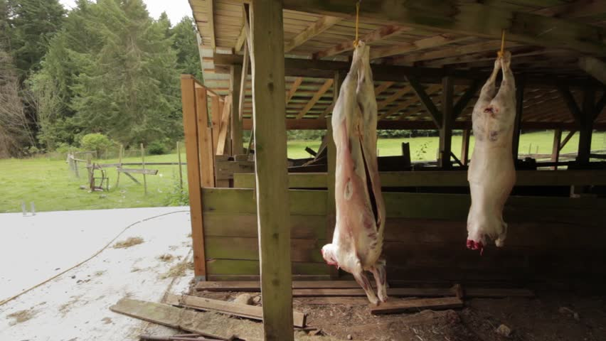 Two lamb carcasses hanging outside after being slaughtered in an ethical way